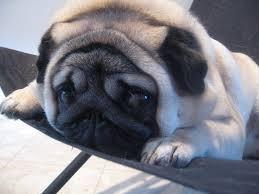 Pugpy