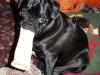 Oliver aka Bubba