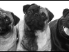 Otis, Shoku & Zoey - January 2012 Winner