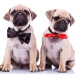 Meet the Puggers!