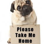 Support Pug Rescues