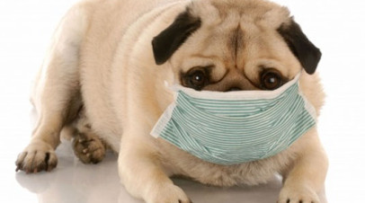 Valley Fever and your Pug