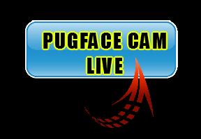 Pug Cam