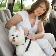 Secure Your Pet on Car Rides